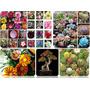 105 Sementes De Flores E Plantas Ornamentais Raras
