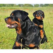 Adopto Perro Joven Y Muy Guardian