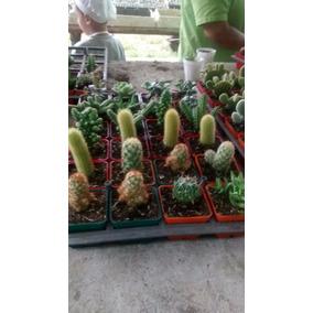 Cactus, Helecho Cola De Pato