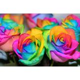 Rosa Arcoiris Semillas Seleccionadas 30 Semillas X 20 Soles