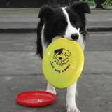 Disco Frisbee Plato Juega Con Mascota Ejercitala Ejerci Aym