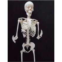 Modelo Anatómico Esqueleto Humano. Totalmente Movible 30 Cms