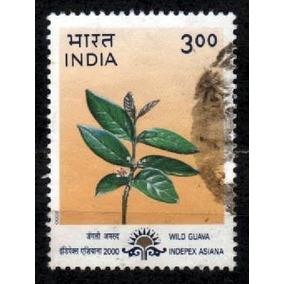 India 2000 * Indepex Asiana * Flora * Wild .guava