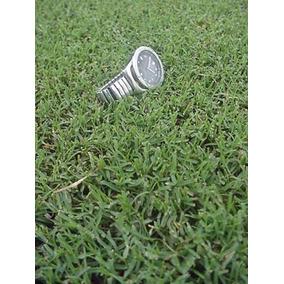 Semillas Certificadas Pasto Bermuda Hibrido Sahverde Cynodon