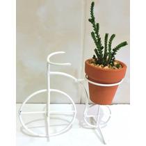 Cactus Para Despedida De Soltera, Plantas De Broma