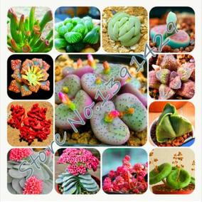 30 Sementes De Suculentas Pedra Viva Cactus P/ Mudas Variado