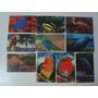 A01281 - Série Pássaros Exóticos - Telefônica - 10 Cts