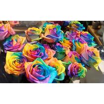 12 Sementes De Rosa Arco-íris (raras) + Frete Gratis