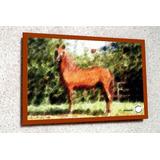 Placa Decor 38x27cm * Cavalo Andaluz .in.art * Frete Grátis
