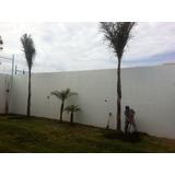 Palmera Coco Plumoso 3.50m Alt Total $550