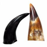 6 Chifre De Boi Polido Facas Drinking Horn Vikings Cutelaria
