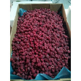 Vendo Frambuesas Congeladas En Bolsas 2kg Entrega Stgo