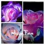 10 Sementes Rosas Exóticas Tipos E Cores - Frete Grátis