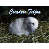 Conejos De Raza Para Reproducción O Mascota.