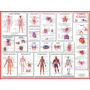 Mapa Sistemas Do Corpo Humano Medicina Saúde - Frete Grátis
