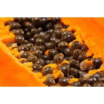 1000 Semillas De Papaya Maradol Red F1 Huerta, Carica Ooh