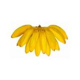 10 Mudas (rizoma) Banana Figo, Pão, Marmelo, De Fritura