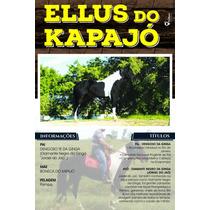 Cobertura De Cavalo Marcha Picada Pampa De Preto Mangalarga