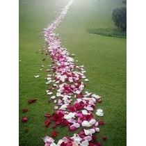100 Pétalas De Rosas Artificiais Idênticas As Naturais Eva