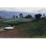 Asesor Cultivos Hidropónicos Nft Industriales E Invernaderos
