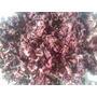 Semillas De Flor De Jamaica