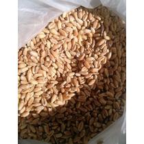 Pasto De Trigo (wheatgrass) Para Producir En Casa. 1 Kilo.