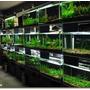 Paq. De Plantas Acuaticas De Mayoreo (130 Plantas Por $449)