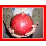 Romã Gigante Pomegranate Punica Sementes Fruta Para Mudas