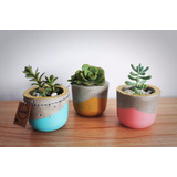 Macetas De Cemento Pequeñas Con Planta -modelo Cup