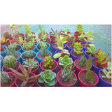 Cactus - Suculentas - Crasas Maceta Nº6 - Souvenir - Regalos