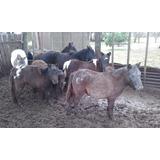 Excelentes Ponys De Diversas Edades Y Palajes