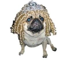 Disfraz Para Perro Tania Alimentos Para Mascotas -dog Traje