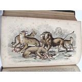 Historia Natural O. Goldsmith 13 Ilust Color Ultra Raro 1864