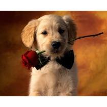 Collar Corbata Moño Mascota Cascabel Perro Gato Conejo Uron