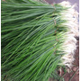 Productos Agropecuarios Sanos Sin Hormona
