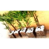 Planta Com Vaso Para Recepção Escritório Salão De Beleza Etc