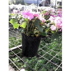 alegras del hogar florales muy lindas - Plantas Colgantes Exterior