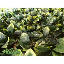 Panel Muro Verde, Plantas Y Enredadera Artficial