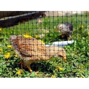 Malla Gallinero Chickenmalla 2x50m Polipropileno Negro