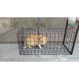 Trampa Para Esterilizar Gatos Tamaño Grande//