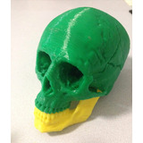 Huesos Humanos Impresos En 3d