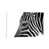 Pintura Arte Ignoring Zebra By Bob Larson, 40x26x0.75