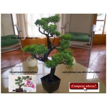 Bonsai Planta Ficus Decorativo Super Elegante Uso Residencia