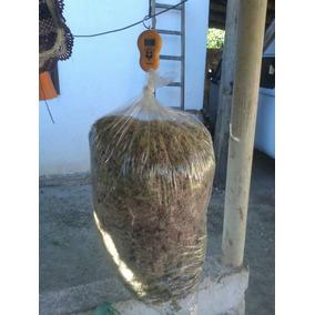 5kg Musgo Sphagnum Esfagno Conhecido Como Chileno Bromélia