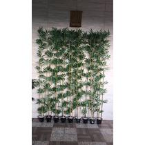 Planta Artificial,bambu Reto 200cm Kit Com 9 Plantas