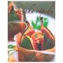 Livro Cozinha Rápida Receitas Práticas Passo A Passo Parrago