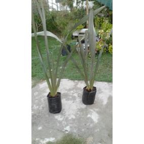 Plantas Fornio