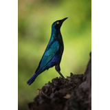 Pájaros De Sudáfrica - Aves - Fauna - Lámina 45x30 Cm.