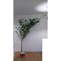 Bambu Artificial Mossô 240cm - Consulte O Frete