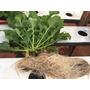 Kit Nutrientes Para Hidroponia 1000 Litros Alface Rucula